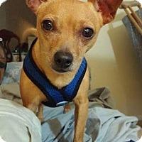 Adopt A Pet :: K.C. - Indianapolis, IN
