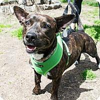 Adopt A Pet :: Mandy Moore - Jersey City, NJ