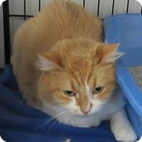 Adopt A Pet :: Sherbert - Glenwood, MN