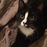 Adopt A Pet :: Binker - Winchester, VA