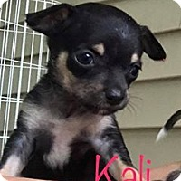 Adopt A Pet :: Kali - Marlton, NJ