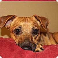 Adopt A Pet :: Duffy - Palm City, FL