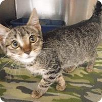 Adopt A Pet :: Kai - Batesville, AR