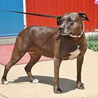 Adopt A Pet :: Roxy - Rochester, IN