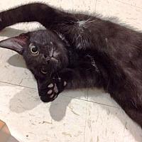 Adopt A Pet :: Heracles - St. Louis, MO