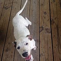 Adopt A Pet :: Dotty - Oakland, AR