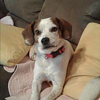 Adopt A Pet :: Mist - Sparta, NJ