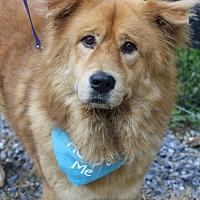 Adopt A Pet :: Leo - West Grove, PA
