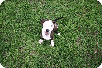 Catahoula Leopard Dog Mix Puppy for adoption in Muldrow, Oklahoma - Liza