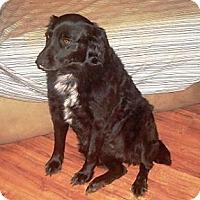 Adopt A Pet :: Sadie - Irvington, KY