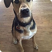 Adopt A Pet :: Shep - loves dogs and kids! - Los Angeles, CA