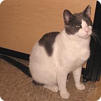 Adopt A Pet :: Prince - Colmar, PA