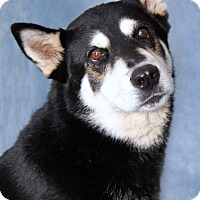 Adopt A Pet :: Ivanka - Encinitas, CA