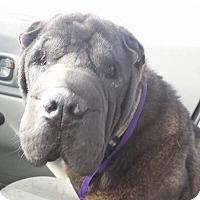 Adopt A Pet :: Samba - adopt pending - Mira Loma, CA