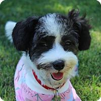 Adopt A Pet :: Poppy - La Mirada, CA