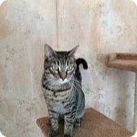 Adopt A Pet :: Chicky - Monroe, NY
