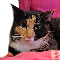 Adopt A Pet :: Argentina - Wayne, NJ