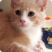Adopt A Pet :: Zoro - Key Largo, FL