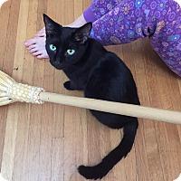 Adopt A Pet :: Adele - Mississauga, Ontario, ON