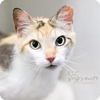 Adopt A Pet :: Sallie - Reisterstown, MD