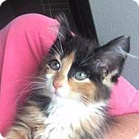 Adopt A Pet :: Kali - Spring, TX