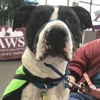 Adopt A Pet :: Big Mac - West Kennebunk, ME