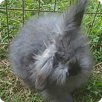 Adopt A Pet :: Jed - Allentown, PA