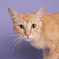 Adopt A Pet :: George - Wilmington, DE