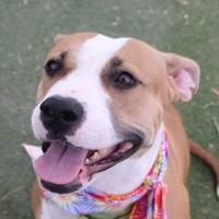 Adopt A Pet :: MYA - Las Vegas, NV