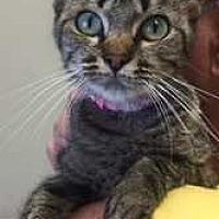Adopt A Pet :: Emerald - Fort Madison, IA