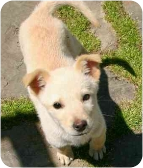 Terrier (Unknown Type, Medium) Mix Puppy for adoption in Avon, New York - Jackie