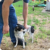Adopt A Pet :: Tinkerbell - West Bloomfield, MI