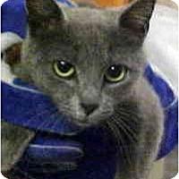 Adopt A Pet :: Gidget - Arlington, VA