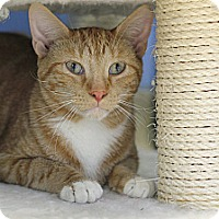 Adopt A Pet :: Vic - Chicago, IL