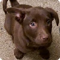 Adopt A Pet :: Tito - Mount Juliet, TN