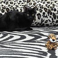 Adopt A Pet :: Harlowe - Spring Branch, TX