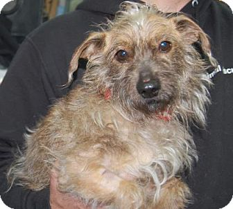 Terrier (Unknown Type, Medium) Mix Dog for adoption in Brooklyn, New York - Orion