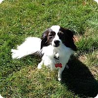 Adopt A Pet :: Mimi - Mount Kisco, NY