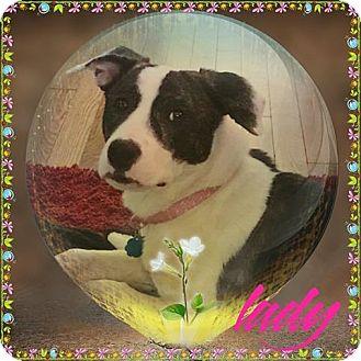 Hound (Unknown Type) Mix Dog for adoption in Valley Stream, New York - Lady