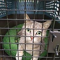 Adopt A Pet :: Sophie - Acworth, GA