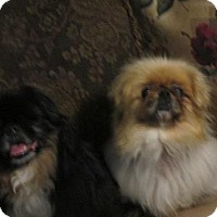 Adopt A Pet :: Lady and Precious - Oakdale, TN