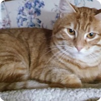 Adopt A Pet :: Howie (brother of Josie) - Witter, AR