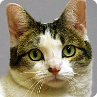 Adopt A Pet :: That Cat - Norwalk, CT