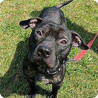 Adopt A Pet :: Lemar Latrell- SPONSORED - Lisbon, OH
