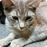 Adopt A Pet :: Benjamin - Morganton, NC