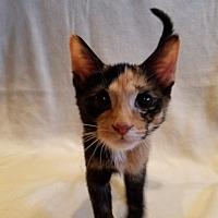 Adopt A Pet :: Ebonee - Sheridan, IL