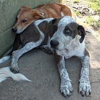 Adopt A Pet :: Fall - Washington, DC