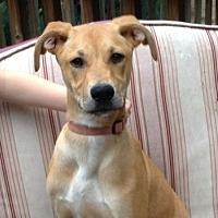 Adopt A Pet :: Frankie - Decatur, GA