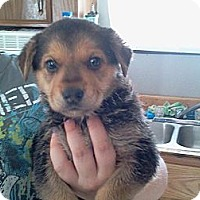 Adopt A Pet :: Telly - Bradenton, FL