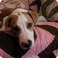 Adopt A Pet :: Ross - Hartsville, TN